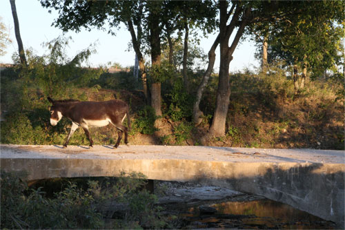 Donkey on bridge