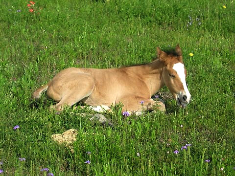 Baby colt in grass